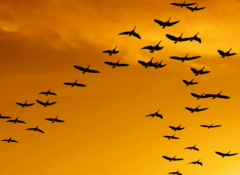 Birds in a orange sky