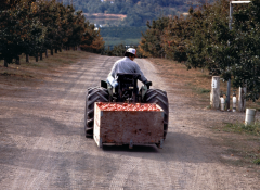 Image of a man on a machine pulling a box of vegetables
