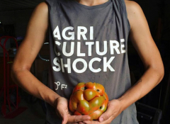 """Close Up of a torso holding an heirloom tomato. """"Agri Culture Shock"""" is seen on the shirt."""